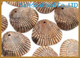 Brown Clam Shell On